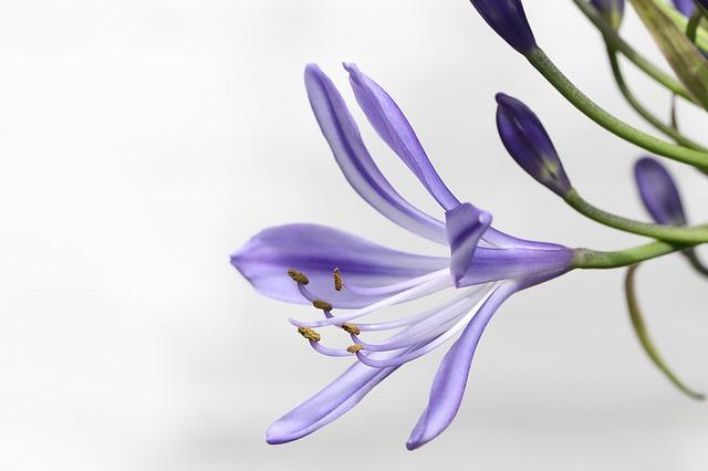 敬老の日の花 ユリ
