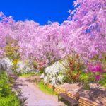京都の桜 名所なのに混雑の少ない穴場のスポット10選