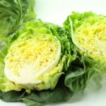 春キャベツの旬はいつ?普通のキャベツとの違いは?栄養素を生かす調理法は?
