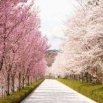 東京の桜 お花見 開花時期と見頃は? 名所・穴場などおすすめランキング10選