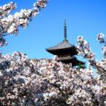 京都の桜 開花はいつごろ?見頃は? 名所穴場などおすすめ10選